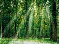 o-poder-da-natureza-e-a-importancia-de-preserva-la-13